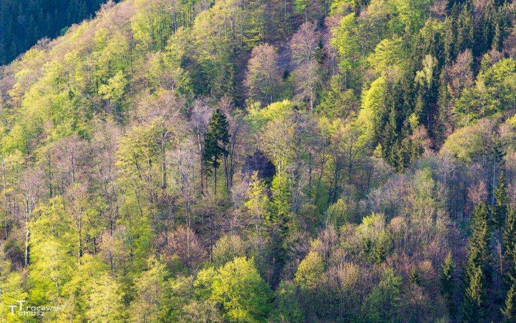 Widok na wzgórze z Czerwonych Skałek na Suchaie