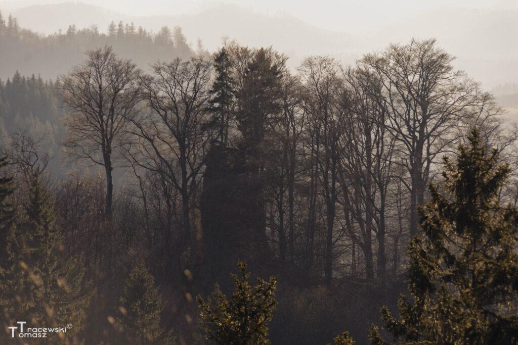 Widok na zamek z czerwonego szlaku na Bukowiec