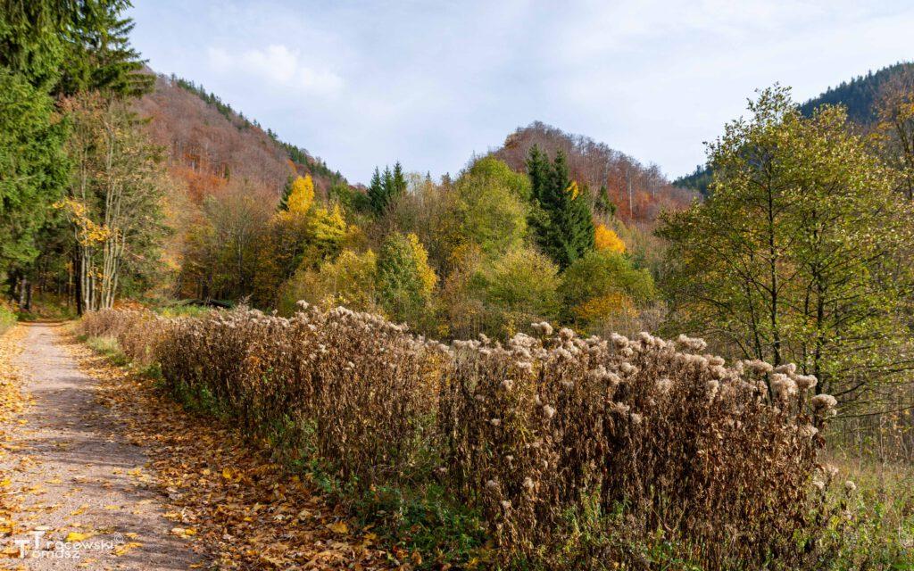 Wzgórze - widok ze szlaku zielonego